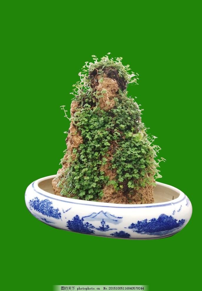 吸水石 盆景 石头 绿色植物 青花瓶盆 设计 psd分层素材 风景 72dpi