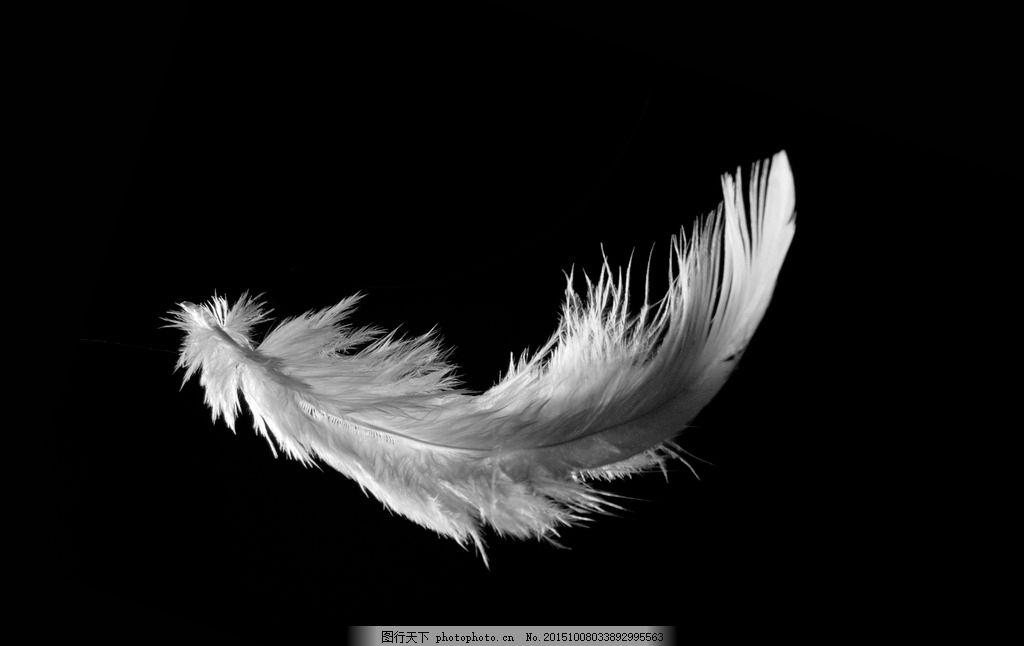 羽毛 白羽毛 高清羽毛 鸽子羽毛 飞舞的羽毛 摄影 其他 图片素材 300