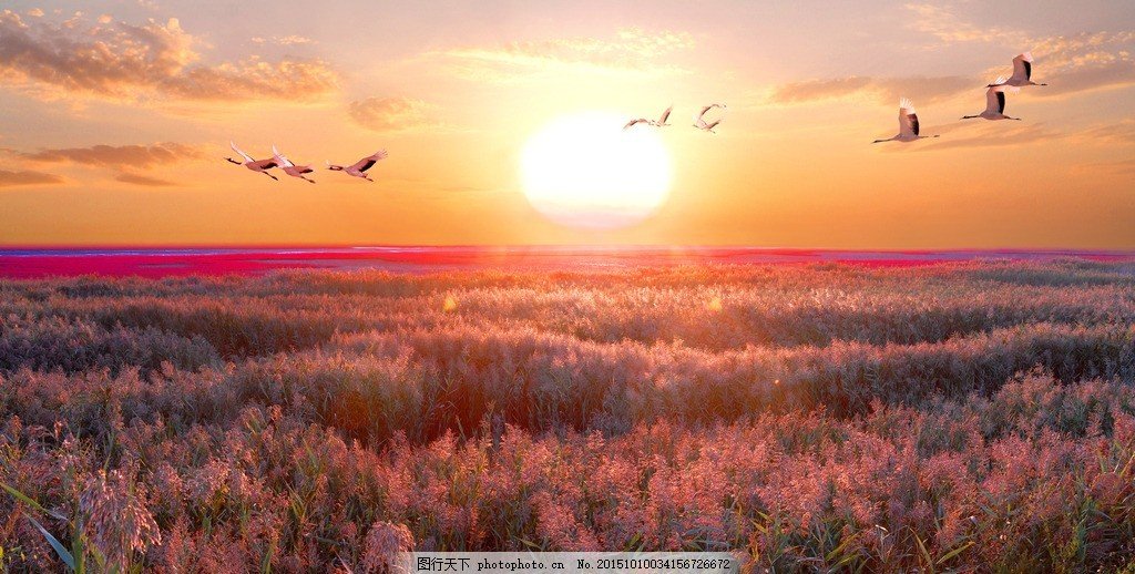 夕阳下的红海滩 夕阳 落日 大雁 丹顶鹤 红海滩廊道 廊道 盘锦 盘锦红