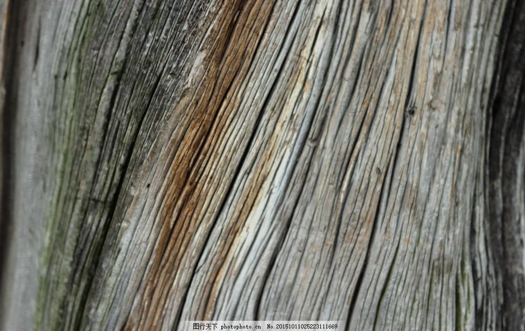 树木纹理 木头纹理 纹理 植物 古树 质感纹理 摄影 生物世界 树木树叶
