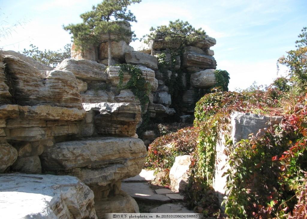 园林 园林景观 装饰画 绿化景观 树木 松树 红叶 爬墙虎 景观山石