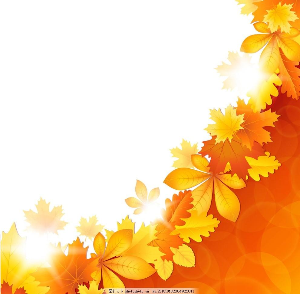 秋天枫叶 黄色叶子 深秋 落叶 叶子 树叶 矢量树叶 秋天 秋季 秋季