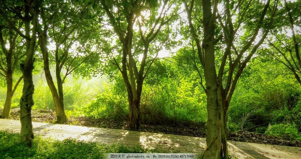 温暖的晨曦 早晨 晨曦 树林 树木 小路 绿色 摄影 自然景观 自然风景