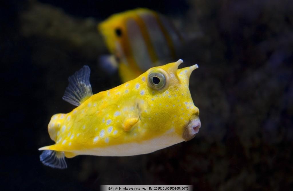 海洋观赏鱼 黄色游鱼 宠物鱼 海洋生物 水生动物 生物世界 海鱼图片