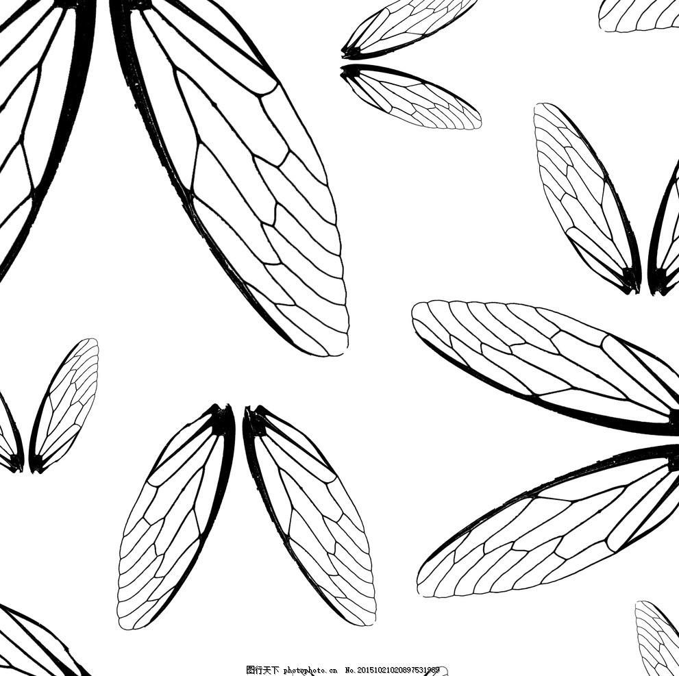 昆虫肌理图案 肌理 自然 黑白 昆虫 蝉翼 设计 底纹边框 其他素材 300