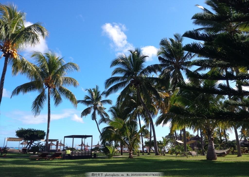 椰树 蓝天 风景 海景 椰子树 蓝天 白云海边 绿地 公园 睡床 旅游