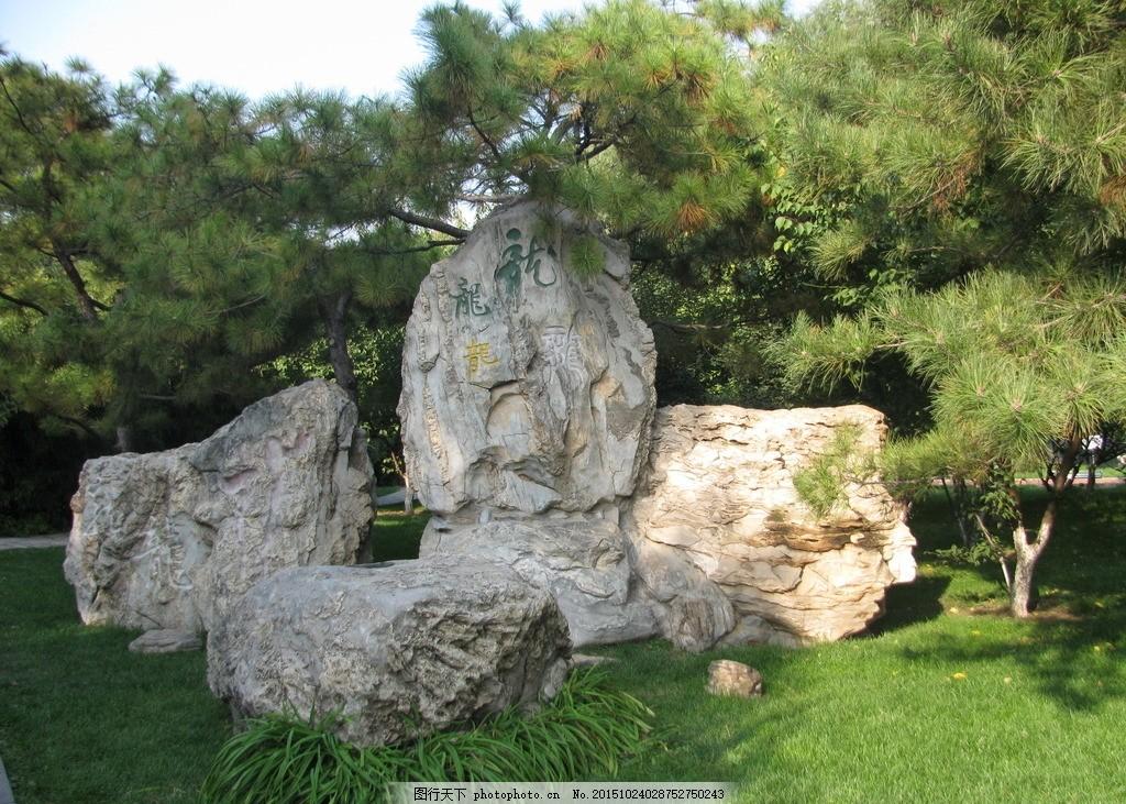 园林景观 草地 绿地 景观石 山石 松树 风景 园林摄影 绿化景观