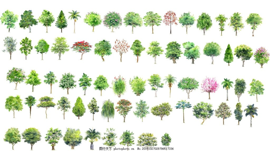园林景观手绘植物立面素材 园林景观素材 效果图 手绘景观 乔木素材