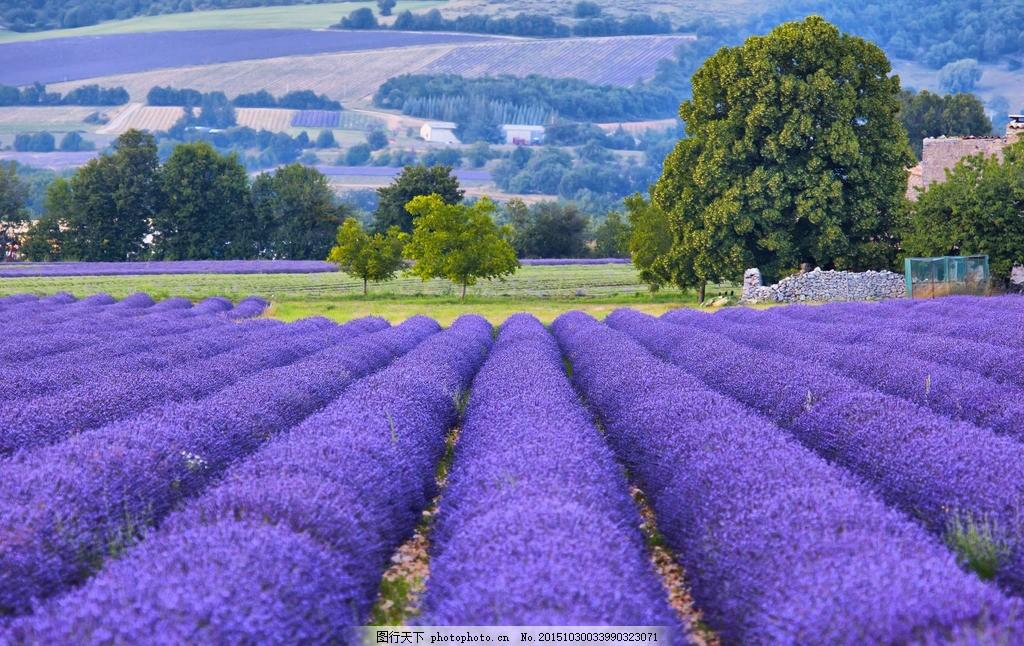 普罗旺斯 唯美 风景 风光 旅行 自然 薰衣草 欧洲 法国 薰衣草庄园