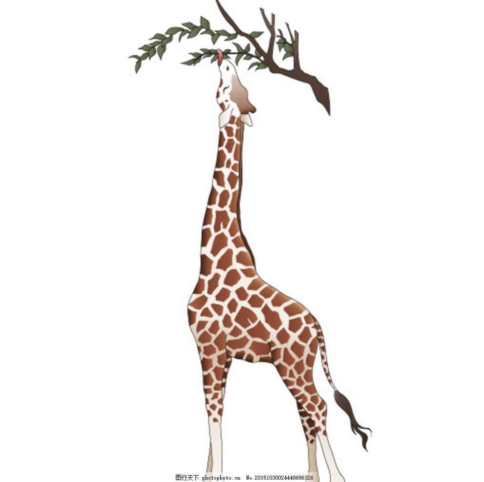 长颈鹿 树枝 斑点 棕色 动物