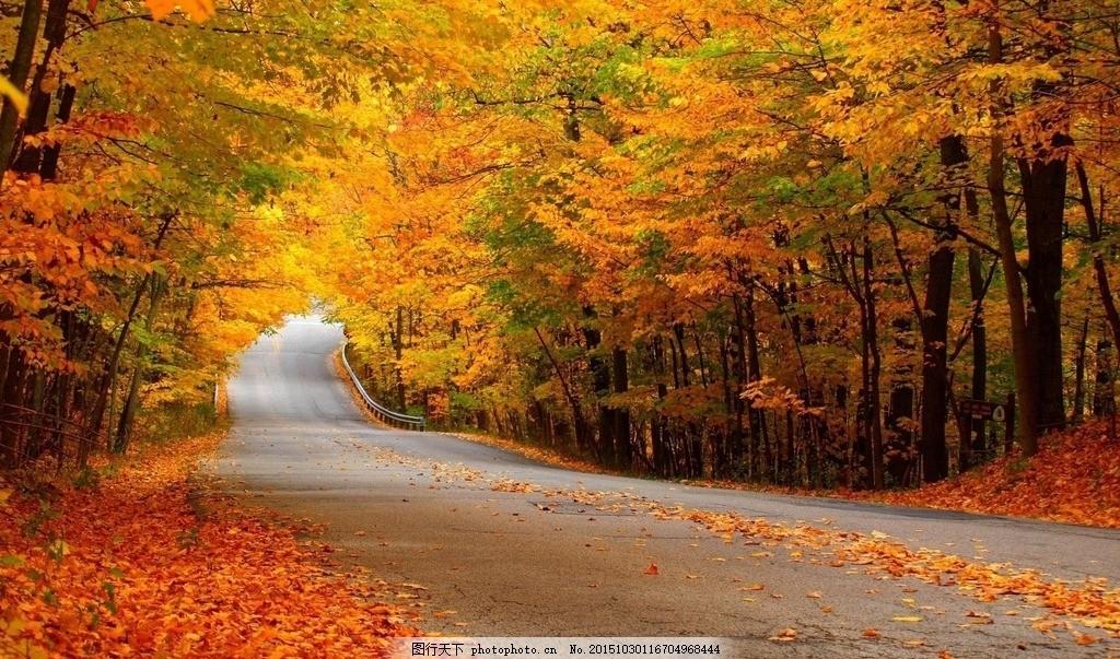 乡间小道 枫叶 自然景观 美景 田园风光 摄影 自然风景