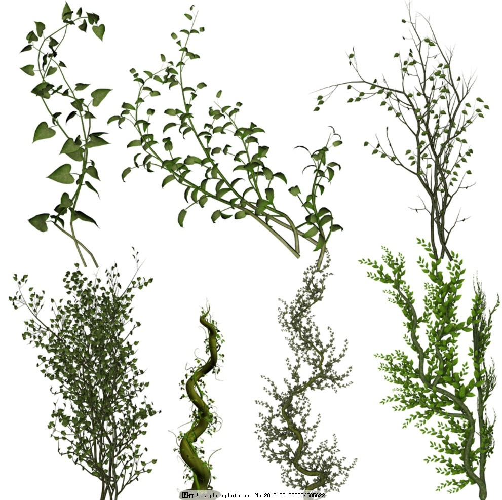 3d植物 藤类 藤蔓 枝叶 园林素材 效果图素材