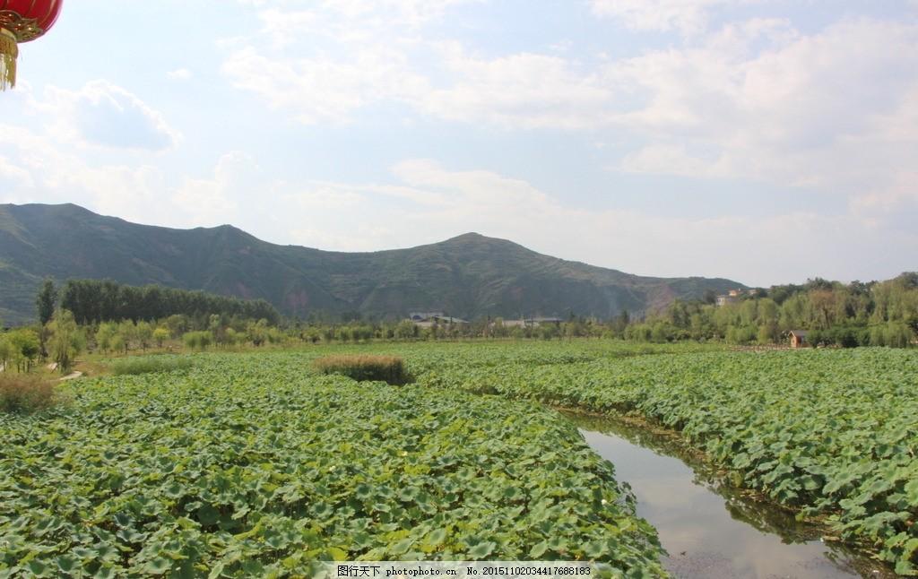 荷花塘 荷花 小路 天空 蓝天 山 荷花 摄影 自然景观 山水风景 72dpi