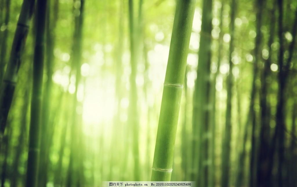 清新唯美竹林 清新竹林 竹林风景 绿竹林 竹子 竹叶 树林 阳光