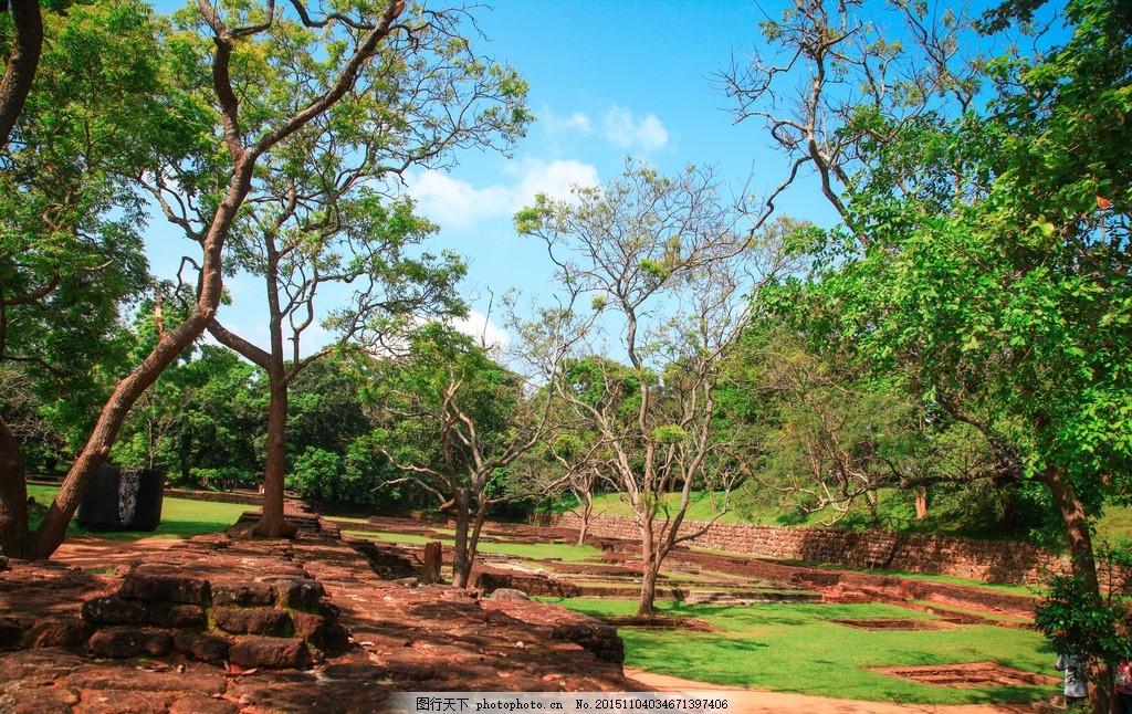 热带树木 树林 斯里兰卡树木 斯里兰卡热带风光 摄影