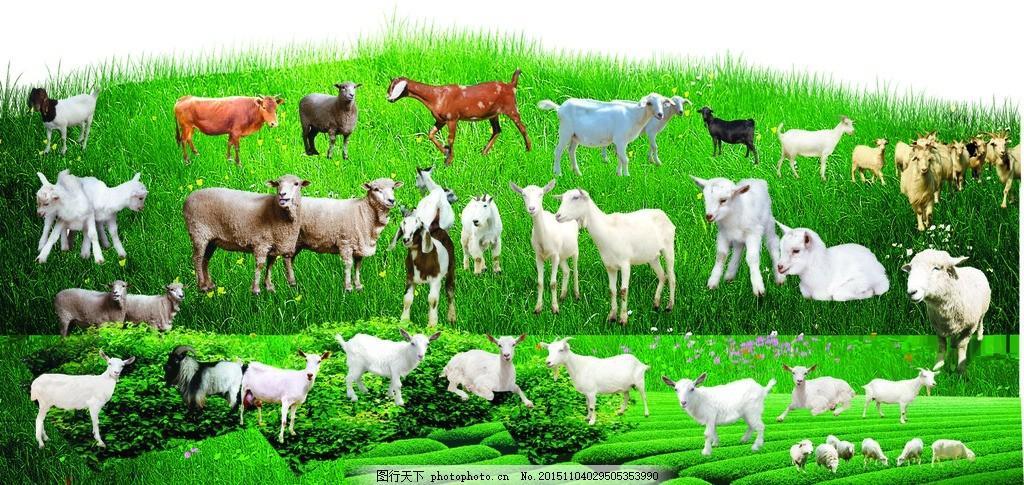 真山羊抠图透明底图片已分层 羊 山羊 真山羊 素材      已分层 设计