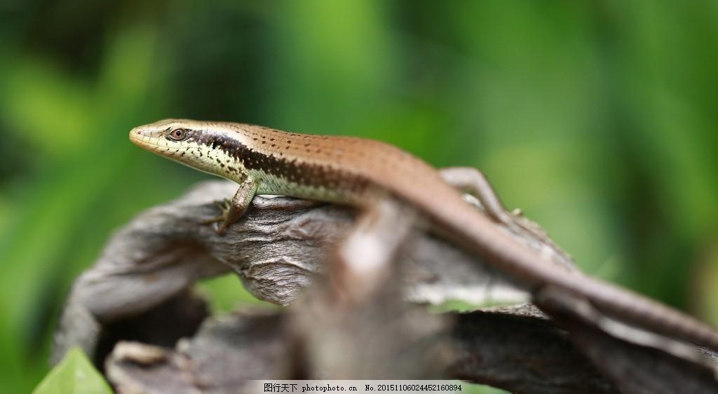 四脚蛇 动物 爬行动物 微距 绿色背景 摄影
