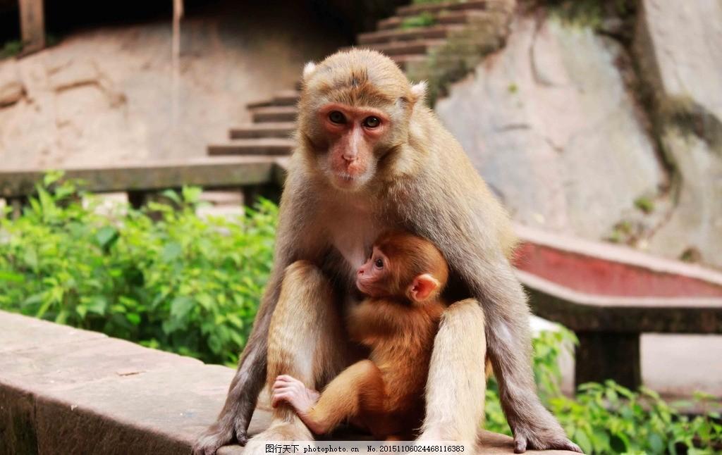 猴 动物园 猴子 四面山 猿猴 小猴子 母猴 母爱 摄影 摄影