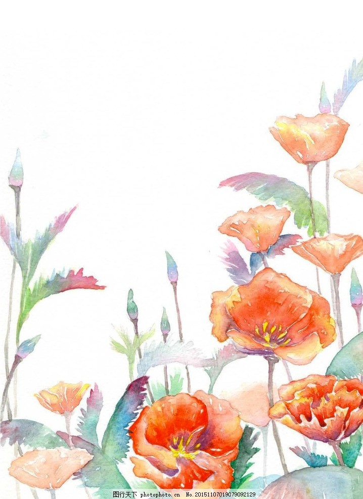 水彩手繪花菱草