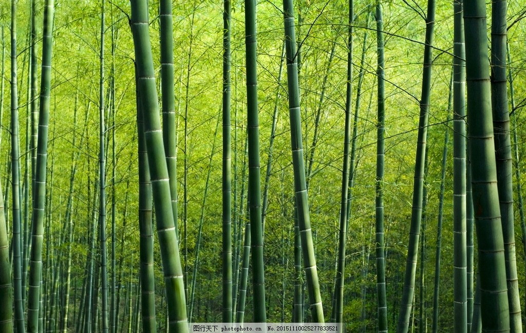 壁纸 风景 森林 植物 桌面 1024_648