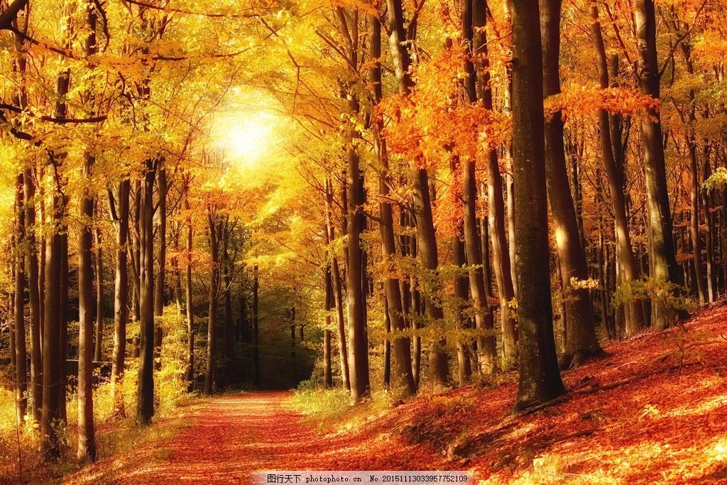奥林匹克公园秋季 唯美 风景 风光 旅行 自然 秦皇岛 秋天 秋景