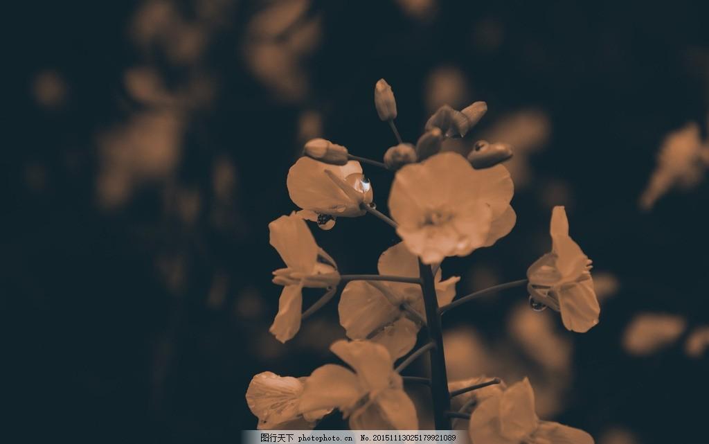 寂寞傍晚的花 悲伤 落寞 孤独 无助 忧郁 安静的花 景集 摄影
