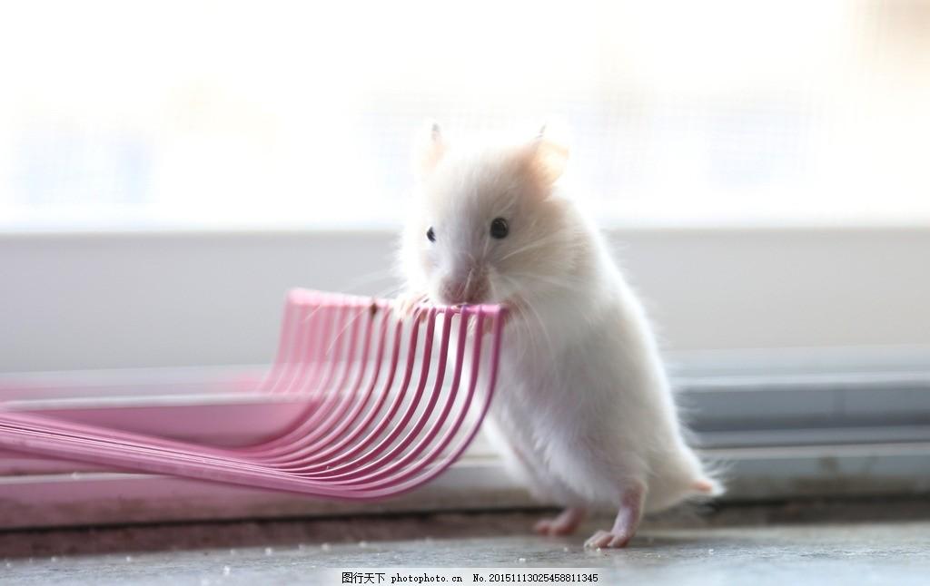动物鼠的图片大全
