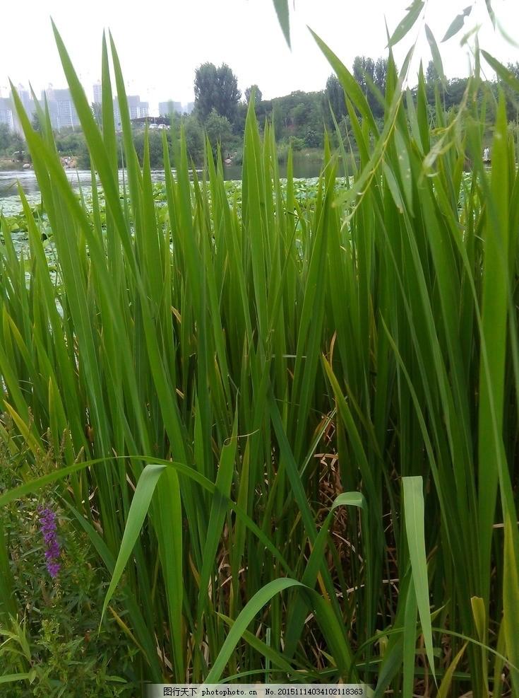 水边绿色草丛背景素材