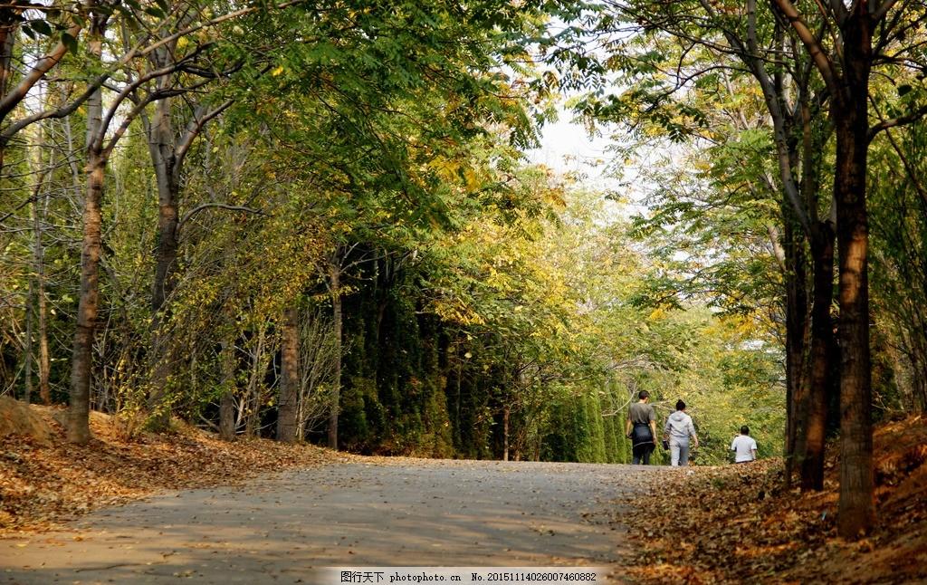 林间散步 洛阳 森林公园 林荫 步道 秋日 秋天 落叶 散步 健步 健身