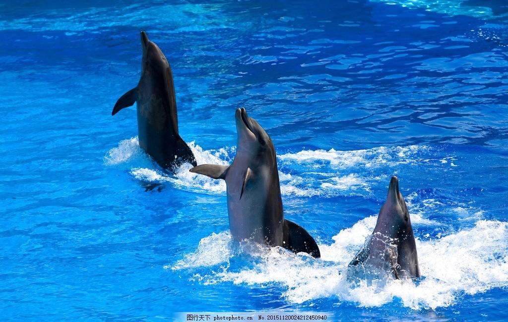 海洋 海豚 海豚表演 表演 动物园 花鸟 摄影 自然景观 建筑景观 300