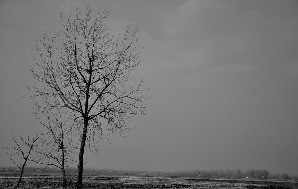 树,黑白风景 空旷 寂寥 悲伤 自然风光 摄影 自然景观