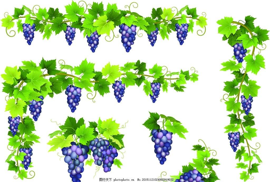 葡萄 手绘 绿叶