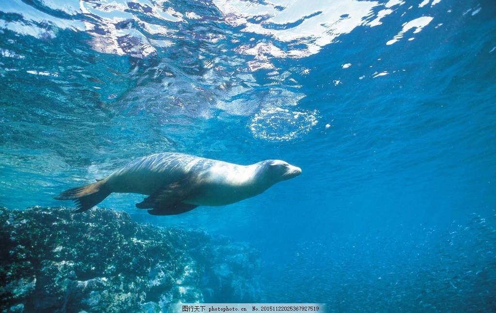 海底世界 海底乐园 海底游鱼 海洋壁纸 海底背景 海洋生物 美丽海洋