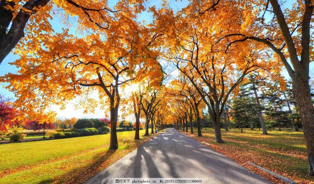 秋色 黄色 入秋 入冬 枫树 枫叶 秋天到了 金色秋天 秋天树林 树林