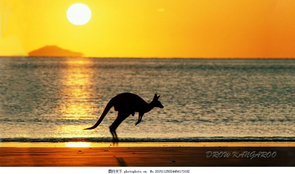 夕阳 美景 海边 动物 日落