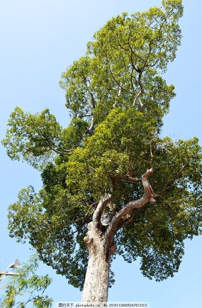 参天大树 参天 大树 树干 树枝 古树 摄影 摄影 生物世界 树木树叶