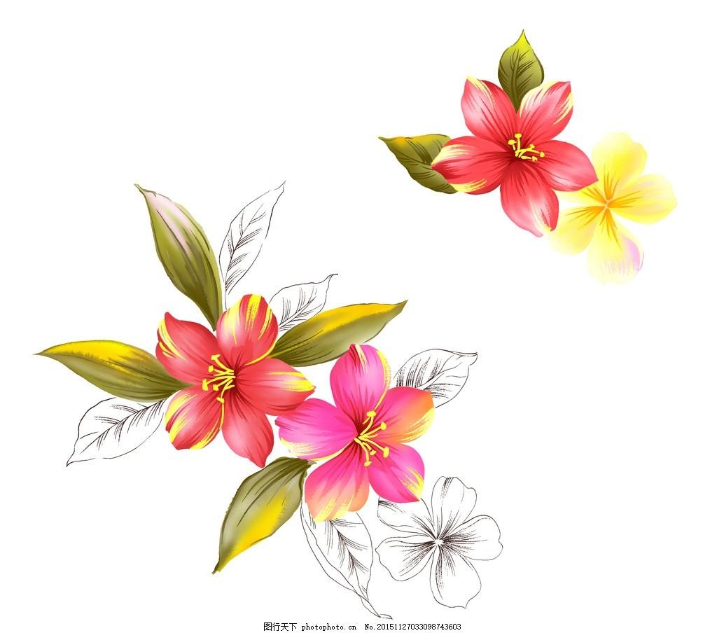 紫荆花 双朵 三朵 透明花卉 国画素材 手绘 素材类