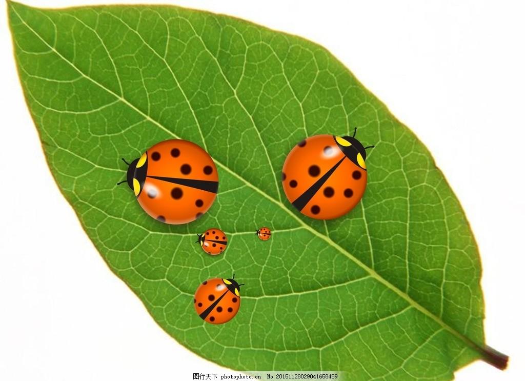 七星瓢虫 树叶 绿色 环境 矢量图制作 真实七星瓢虫 动物可爱