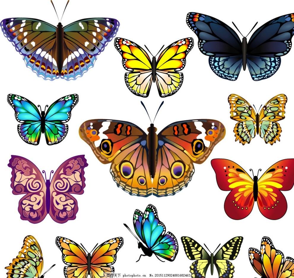 彩色蝴蝶 手绘 翅膀 蝴蝶图案 蝴蝶标本 矢量
