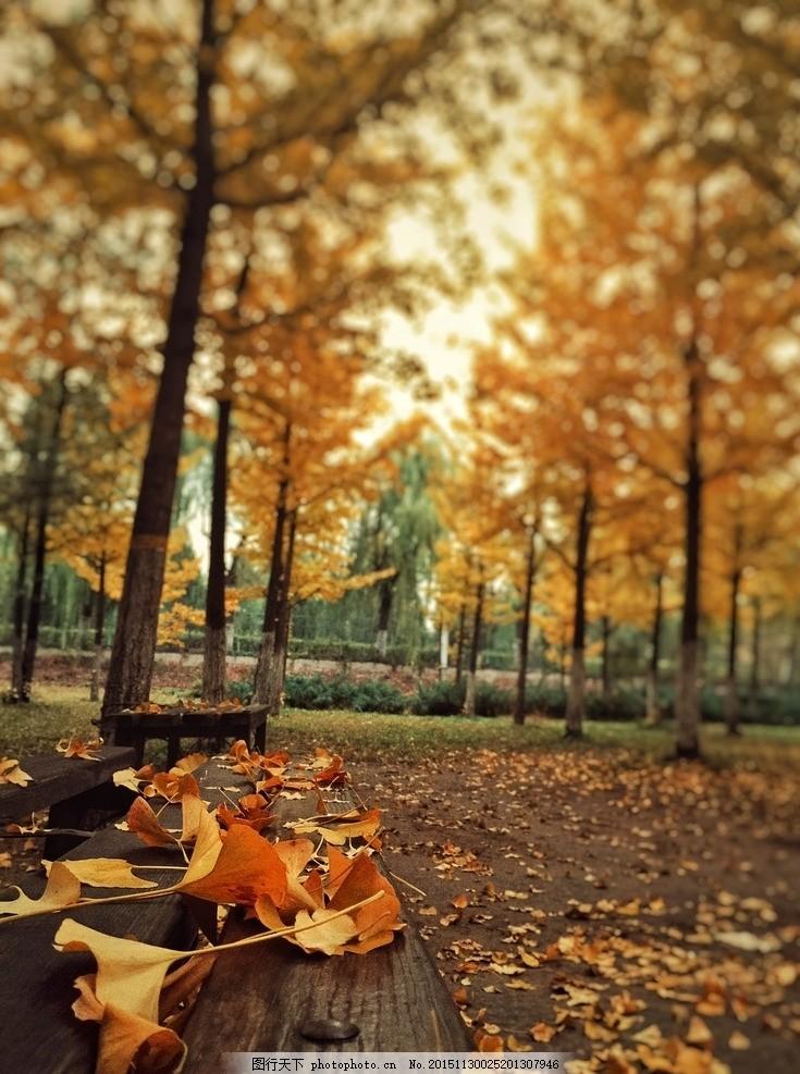9月落叶风景图竖版
