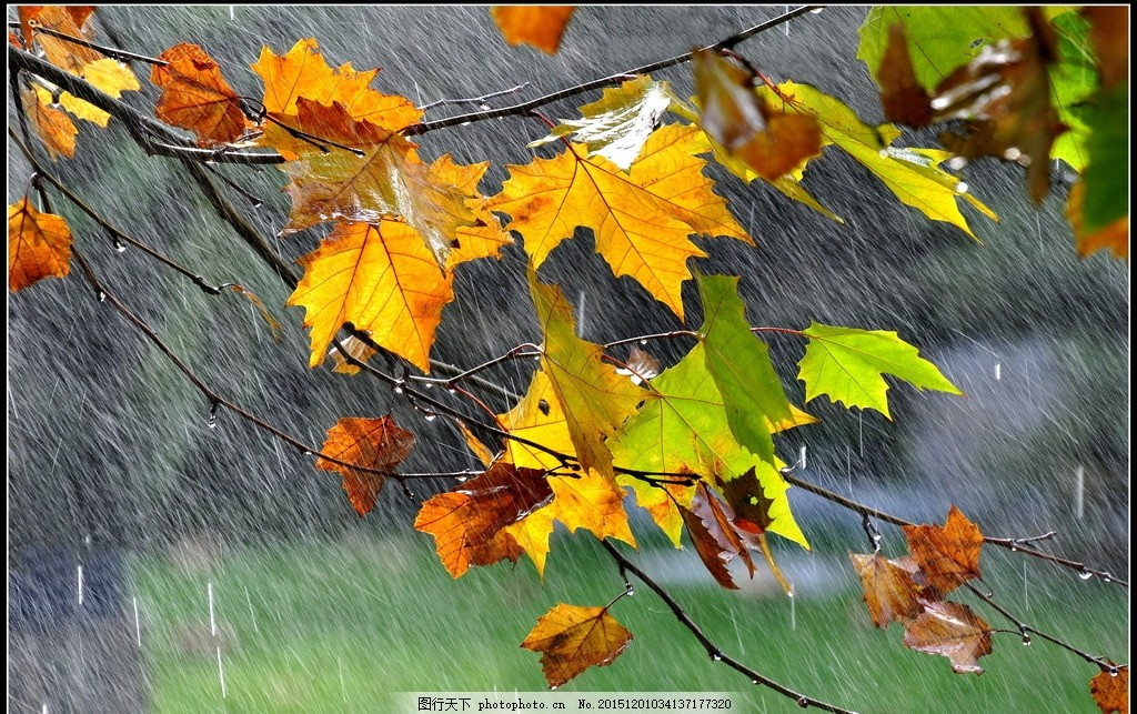 设计图库 自然景观 自然风景  秋天的雨 秋天 雨水 秋雨 下雨 雨天 下