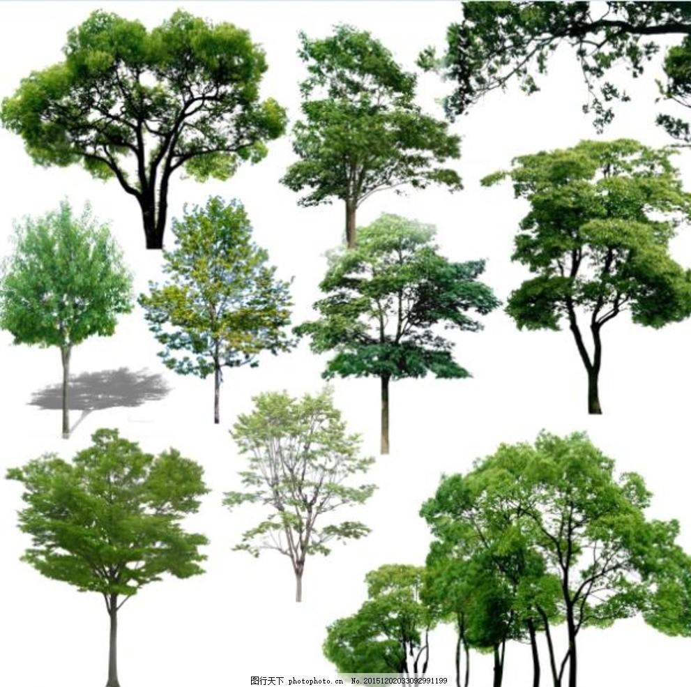 ps乔木素材 树木 园林植物 园林绿化 景观效果图