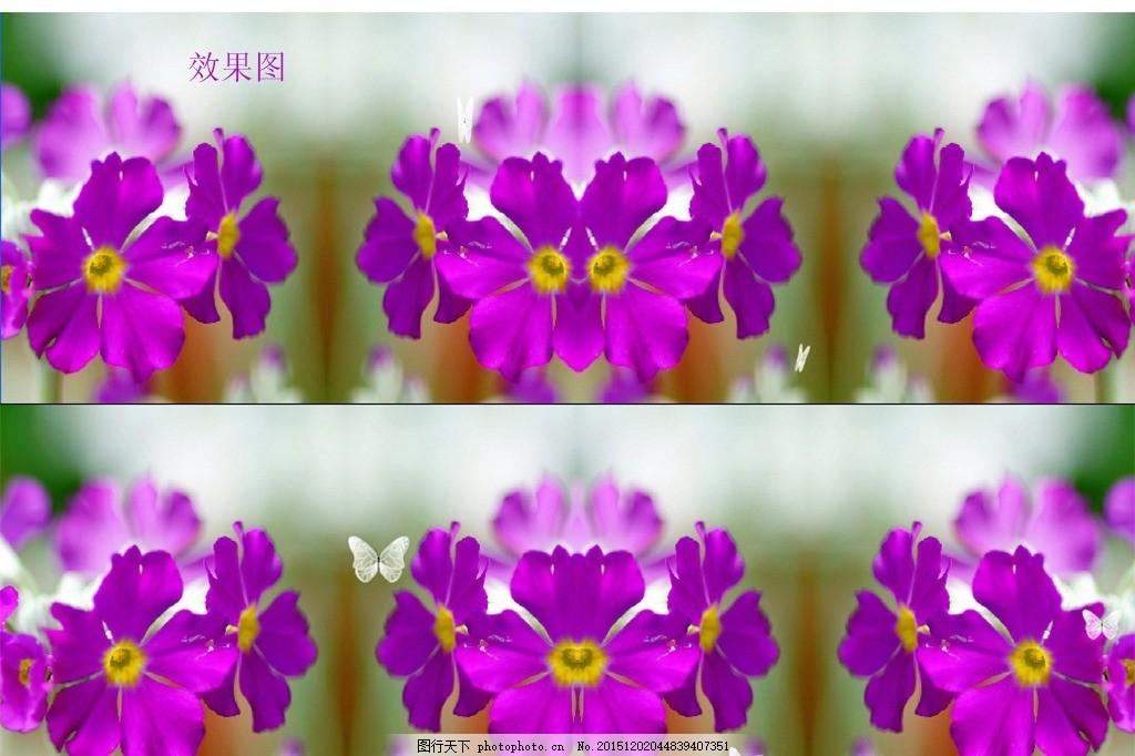 紫色花视频背景素材