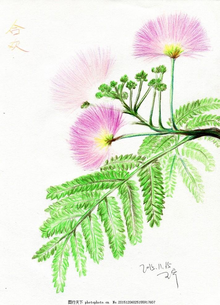 彩铅笔 手绘 花朵 合欢 花