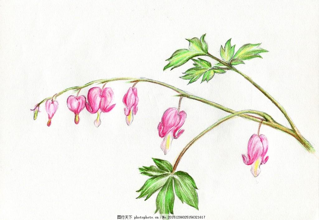 彩铅笔 手绘 花朵 荷包牡丹 花卉 彩铅笔手绘花卉 设计 生物世界 花草