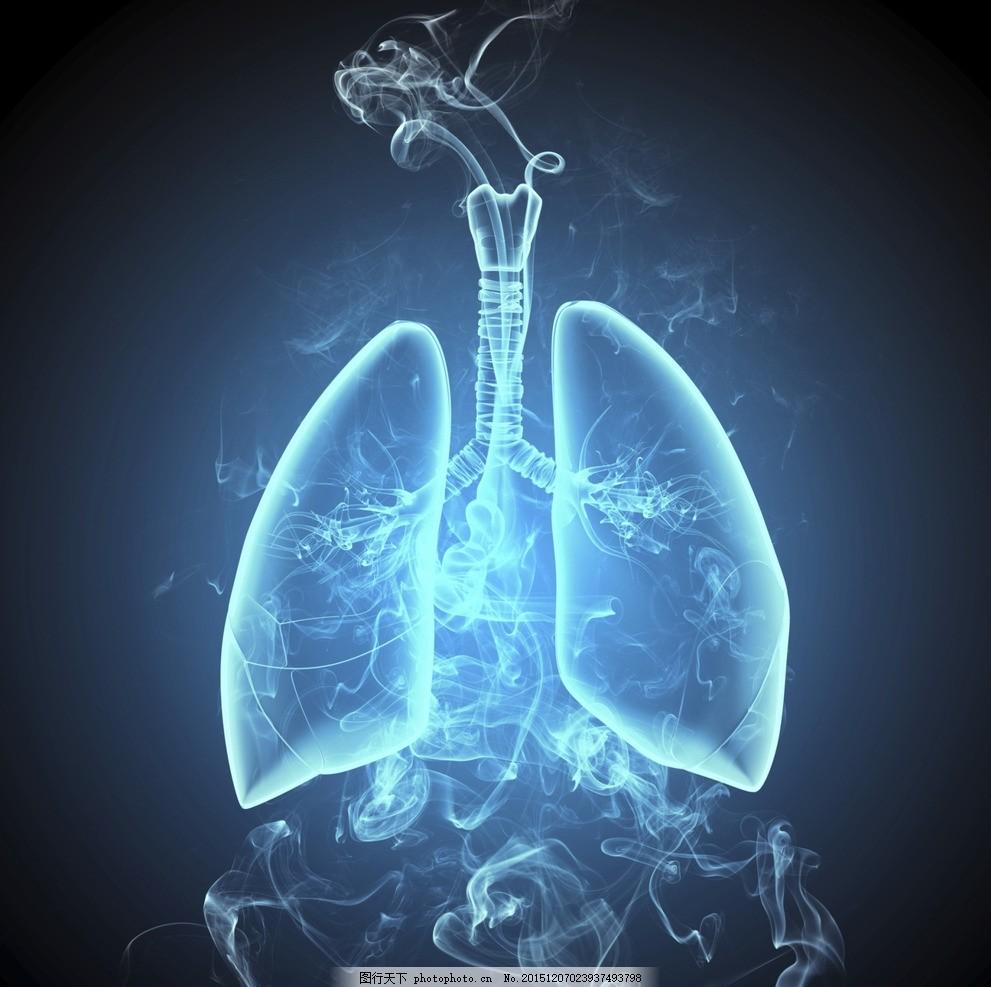 肺部结构 肺创意图 器官 脏器 心血管 人体 人体器官 心脏 呼吸道