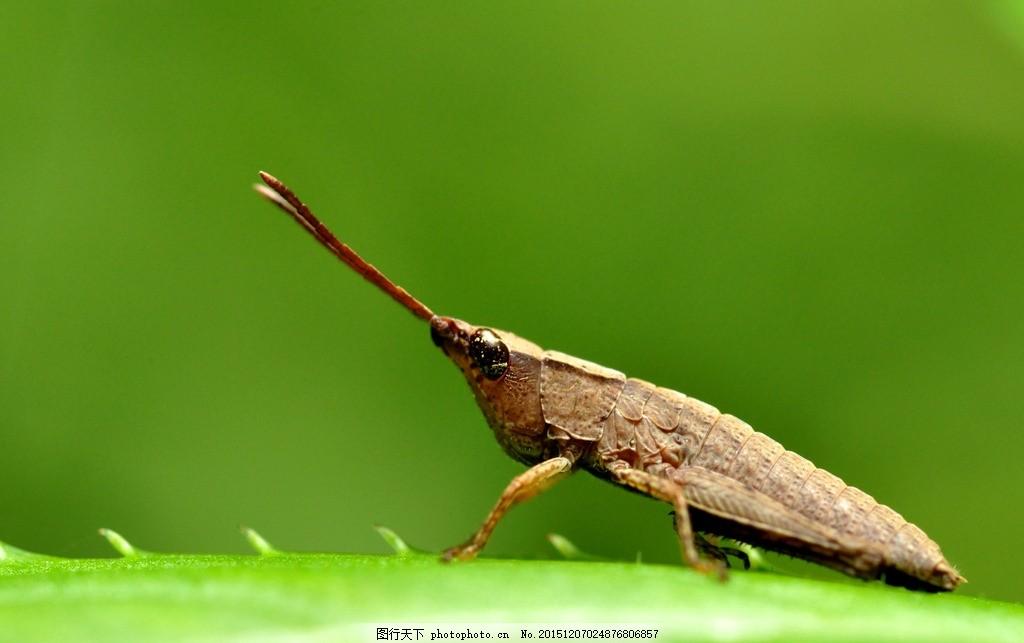 虫 昆虫 树叶 动物 小动物 虫子 摄影 生物世界 昆虫 300dpi jpg