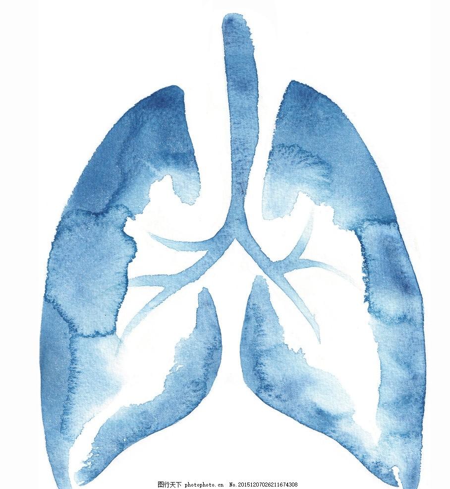 人体肺部结构