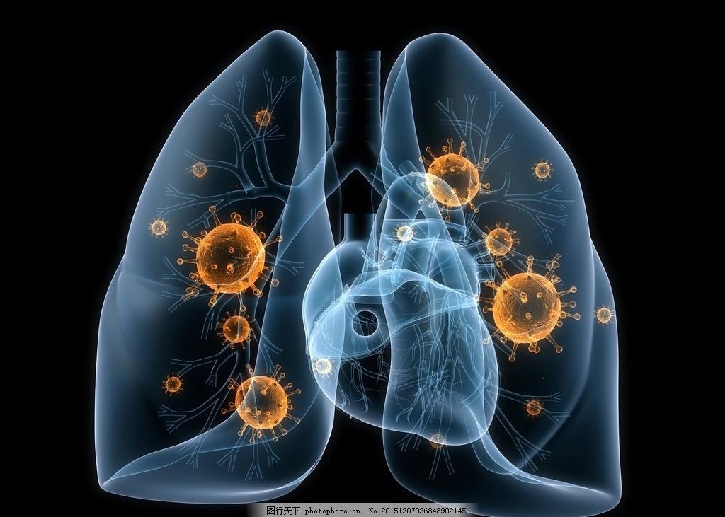 肺病毒 人体肺部结构 矽肺病 呼吸道 烟 吸烟有害健康 心脏 器官