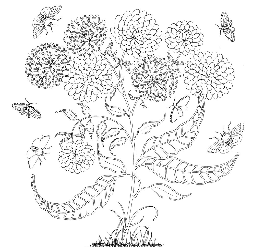秘密花园 手绘本 秘密花园 动植物图 素描图 秘密 黑白 设计 文化艺术
